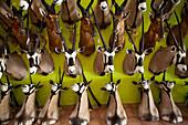 Mounted antelope heads