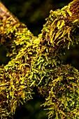 Moss covered garden trellis