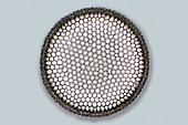 Diatom, light micrograph