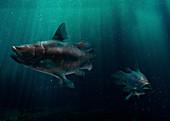 Mawsonia prehistoric fish, illustration