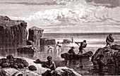 Sponge fishing, 19th century illustration