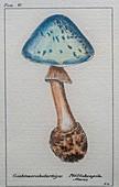 Mushroom, illustration