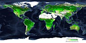 Global atmospheric carbon removal by plants, autumn 2000