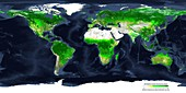Global atmospheric carbon removal by plants, summer 2000