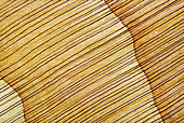 Cedar of Lebanon oblique wood section, light micrograph