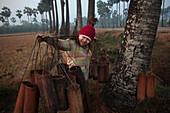 Palm tree farmer collecting sap, Myanmar