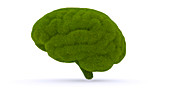 Grass brain, illustration