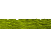 Grass landscape, illustration