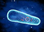 Legionella pneumophila bacterium, illustration