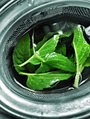 Fresh peppermint leaves in a tea strainer