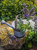 Ein Strauß weiß und violett blühende Gartenblumen in Vintage-Gießkanne