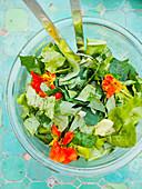 Lettuce with nasturtium