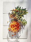 Sea buckthorn berries and twigs