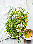 Erbsen-Burrata-Salat mit eingemachter Zitronensalsa