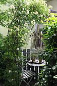 Versteckter Sitzplatz zwischen Kletterrose und Kirschlorbeer