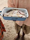 Person präsentiert frischen Fisch in San Antonio, Belize