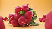 Fresh red radish on yellow background