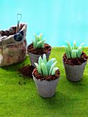 'Succulent garden' - aloe vera cake