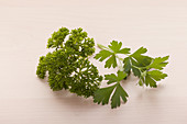 Flat leaf and curly leaf parsley
