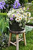 Strauß aus Frühlingsmargerite, Witwenblumen, Gräsern und Wiesenkümmel auf Hocker im Garten