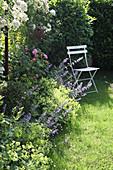 Stuhl am Beet mit Katzenminze, Frauenmantel, Buchs und Rose 'Gertrude Jekyll' und Ramblerrose 'Guirlande d Amour'