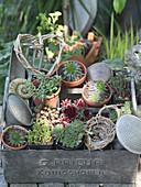 Mini-Sukkulenten in kleinen Töpfen, dekoriert mit Herz aus Zweigen und Utensilien