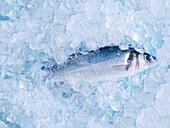 Ein frischer Fisch auf Eis