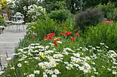 Frühsommerbeet im Naturgarten: Margeriten, Klatschmohn, Bocksbart und Würzfenchel