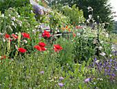 Sitzplatz im Wildblumenbeet: Klatschmohn, weiße Lichtnelke, gelber Wau,Wiesen-Flockenblume und Wiesensalbei