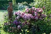 Frühsommerbeet mit Rhododendron 'Silberwolke', Zierlauch, Hornveilchen, Akelei und Funkie, Frauenfigur aus Terracotta