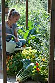 Frau gießt im Gewächshaus, Kapuzinerkresse, Natternkopf, frisch geerntete Kohlrabi