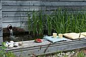 Zyperngras im Wasserbecken als Kläranlage für den Swimmingpool, Beckenrand mit Kissen als Sitzplatz