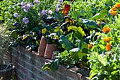 Hochbeet Malve, Ringelblumen und Gemüse