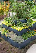 Hochbeet mit Kunststoffelementen gebaut: Chili, Tomaten, Gold-Oregano, Thymian, Ringelblumen und Bohnenkraut