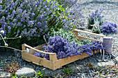 Obststeige mit frisch geerntetem Lavendel