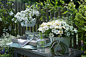 Willkommens-Arrangement mit Kapkörbchen, Verbene, Zauberschnee, Schneeflockenblume, Graskranz, Karaffe und Gläser auf Bank am Zaun