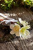 Kleiner Strauß aus Blüten der Christrose