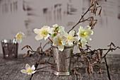 Kleiner Strauß aus Blüten der Christrose in Silberbecher, Haselzweige