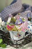 Kleine Tassen mit Duftwicken und Dill-Blüten