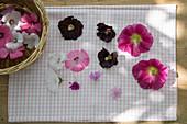 Blüten von Stockrose, Bechermalve und wilder Malve