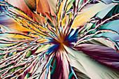 Engineering chemicals, polarised light micrograph