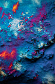 Rose wine, polarised light micrograph