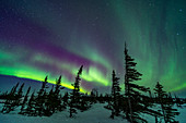 Aurora over boreal forest, Canada