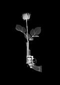 Magnum gun and rose, X-ray