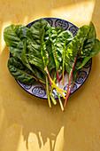 Fresh Swiss chard leaves on plate