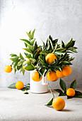 Orangenzweige mit Blättern und Früchten in Krug