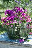 Sträuße mit Blüten verschiedener Sorten Flammenblumen Ton-in-Ton mit Gräsern in Drahtkorb arrangiert