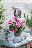Stehende Geranie 'Flower Fairy Pink' in Korbgestell, Zweige von Rosmarin und Thymian, Sträußchen aus Schnittlauch, Schleifenblume und Glockenblume, Tassen