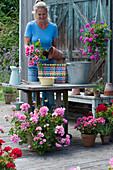 Bunten Flechtkorb mit Geranie bepflanzen, Frau