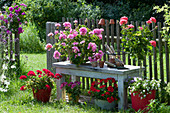 Stehende Geranie 'Rosita', 'Deep Red', 'Red White Bicolor', 'Caliente Fire' und 'Lorena' (Stämmchen) unterpflanzt mit Zauberglöckchen am Gartenzaun